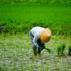 農家住み込みバイト体験談。1日のスケジュール