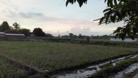 インドネシア パレ