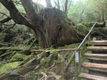 リゾートバイトおすすめの場所・屋久島